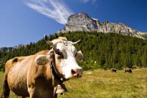La spettacolare Alpe Veglia, raggiungibile da San Domenico