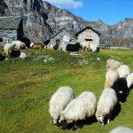 San Domenico, Alpe Ciamporino